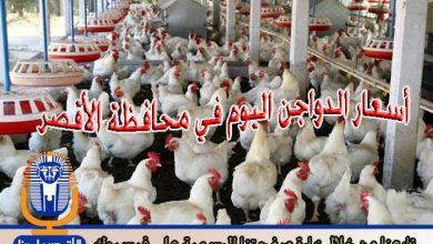 Photo of أسعار الدواجن اليوم الأربعاء 4 / 7 / 2018 في الأقصر