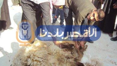 Photo of ذبح الأضاحي بالمجان في المجازر الحكومية بالأقصر طوال أيام التشريق