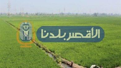 Photo of زراعة الأقصر تستعد لأجازة العيد بحماية الأراضي من التعدي