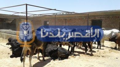 Photo of مركز أرمنت يستقبل 29 رأس عجل من مؤسسة مصر الخير