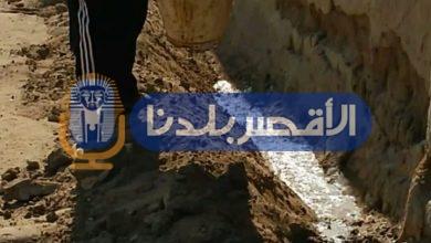 """Photo of """"وزير الزراعة"""" نواصل  حملات مكافحة النمل الأبيض خلال إجازة عيد الأضحى بالأقصر"""