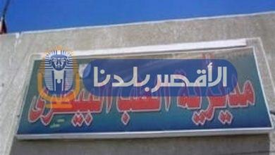 """Photo of """"بيطري الأقصر"""" تطلق حملة للتحصين ضد مرضى الحمى القلاعية السبت المقبل"""