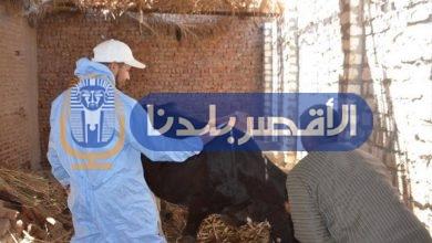 "Photo of ""بيطري الاقصر"" يعلن انطلاق الحملة القومية لتحصين الماشية ضد أمراض الحمى"
