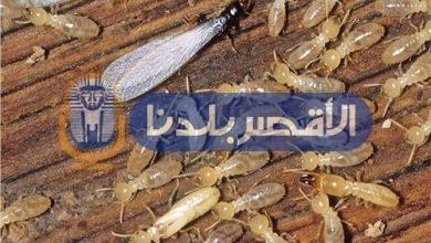 Photo of «زراعة الأقصر» تكافح النمل الأبيض في 25 منزلا بقرية الأقالتة غربي الأقصر .