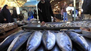 Photo of أسعار الأسماك اليوم الأحد 2 / 12 / 2018 في الأقصر
