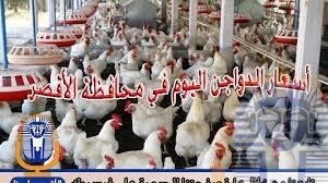 Photo of أسعار الدواجن اليوم الخميس 15 / 11 / 2018 في الأقصر