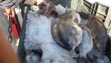 """Photo of """"تموين الأقصر"""" تنظم مبادرة لبيع الأسماك بأسعار تبدأ من 12,5 جنيه للكيلو"""