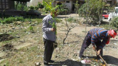 """Photo of تحت إطار مبادرة """"شباب في حب مصر""""..زراعة أشجار مثمرة بشوارع وميادين الأقصر"""